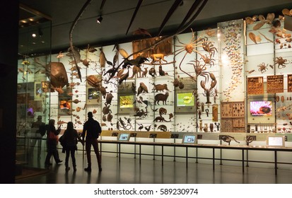 NEW YORK, USA - December 05, 2016: Hall of biodiversity at the American museum of Natural History (AMNH)
