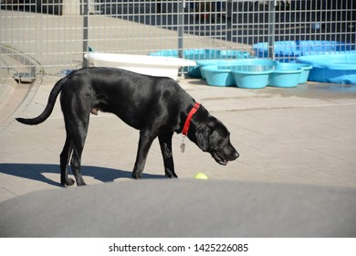 New York, USA - June 3, 2019: Dog park in Gantry Plaza State Park in Queens