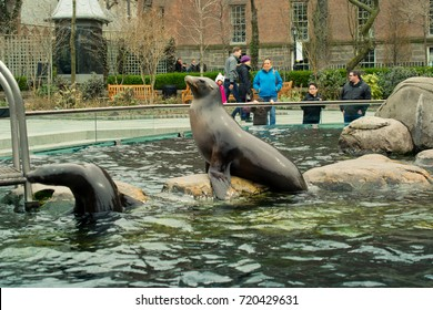 NEW YORK, USA - MARCH 26: Zoo in the central park. Central Park in New York is one of the largest  the USA and the most known the world on March 26, 2014 in New York, USA