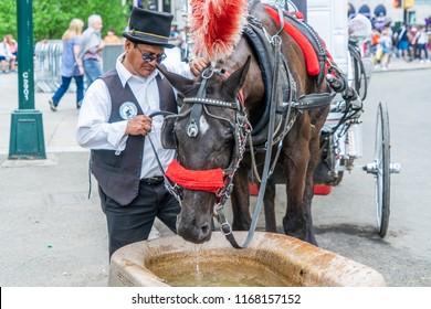 NEW YORK, USA - MAY 5, 2018: A horse and buggy carriage with coachman in Central Park in New York City