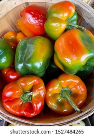 New York, USA. Peppers. Homegrown, organic, ripe colorful pepper mix of different sizes in a bucket sold in farmers market. Harvest. Composition of different peppers varieties. Top view.