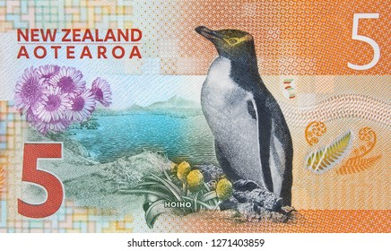 New Zealand 5 dollar 2015 banknote, penguin. New Zealand money currency close up.