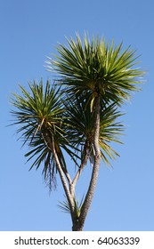 New Zealand cabbage tree against a beautiful blue sky