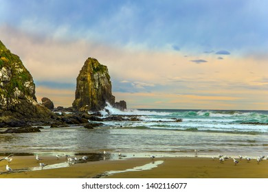 New Zealand. Cannibal Bay on Pacific coast of the South Island. Flock of white cormorants resting in the sand. Wide beach with white sand and blue-green water. The concept of  phototourism