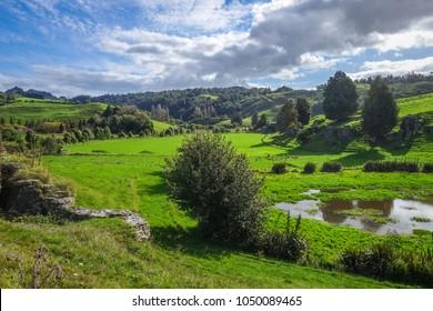 New Zealand countryside fairy landscape in Waitomo