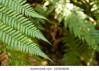 New Zealand Fern frame with three leaves to the left and copy space to the right