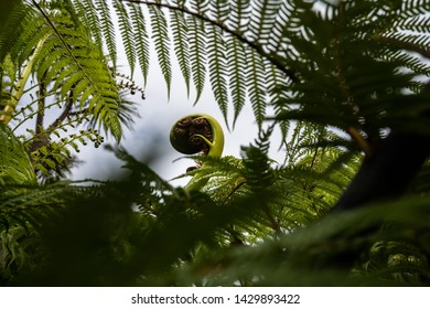A New Zealand fern (Koru) framed nicely by the surrounding foliage