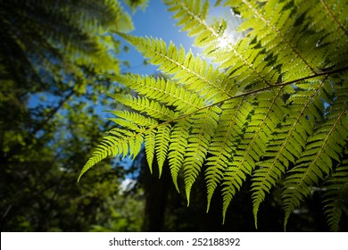 A new zealand fern in a lush forest up close.