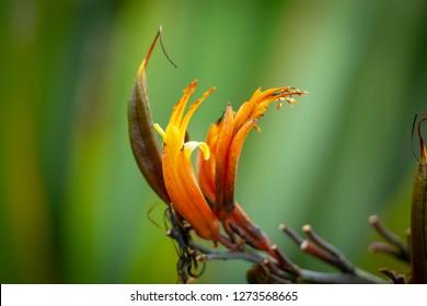 New Zealand flax flower against defocused background