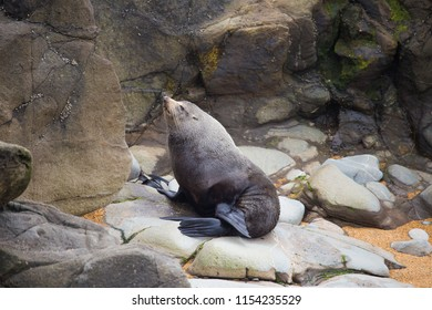 New Zealand fur sea lions found in Catlin area, South Island