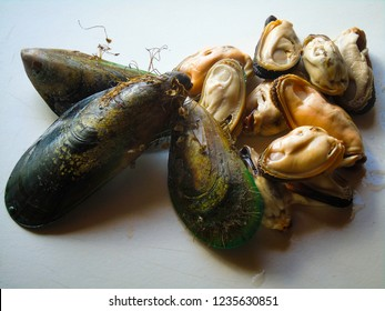 New Zealand Green lipped Mussel for dinner; seen both in the shell and shell-less