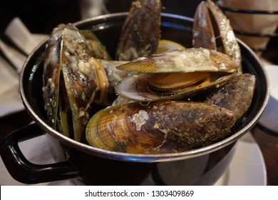 New Zealand Green Mussel Stew with cream sauce