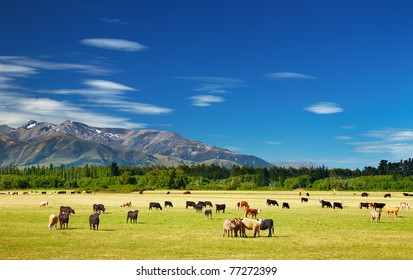 New Zealand landscape with farmland and grazing cows