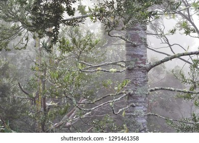 New Zealand native forest during heavy rain causing low visibility and gloomy impression with kauri tree trunk in foreground.