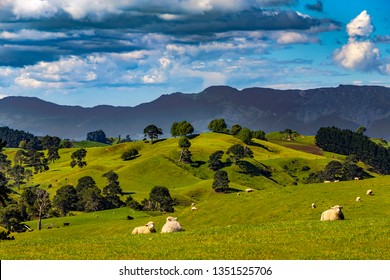 New Zealand, North Island, Waikato Region. Rural landscape near Matamata. There is Kaimai Range in the background