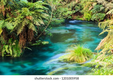 New Zealand River Landscape at the Blue Spring, Waikato Region. Native Forest Surrounding Crystal Clear Water