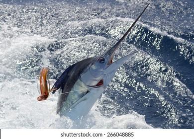 New Zealand striped marlin