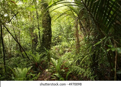 New Zealand tropical forest