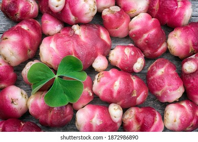 New Zealand yam (Oxalis tuberosa), also called uqa or oca. This exotic, bright red root is a food used in the Andes