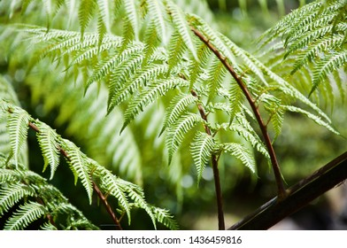 New Zealand's silver fern. Beautiful compositions of nature's best creations.