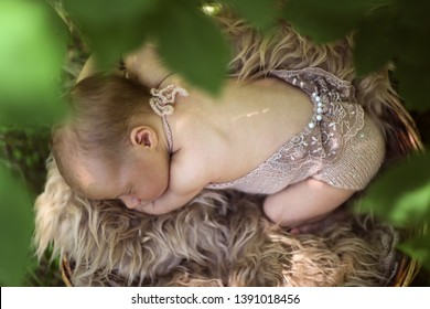 Newborn baby in a basket among the leaves, newborn outdoor photography