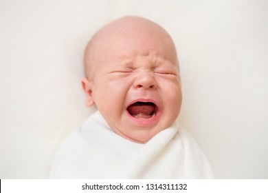 Newborn baby boy on a white background. Baby is crying