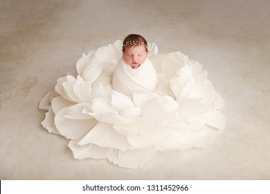 Newborn baby girl, 12 days old, posed in giant white flower, studio session.