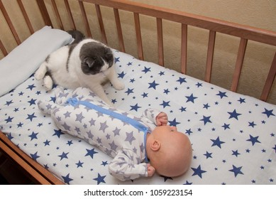 A newborn baby lies in a crib with a cat