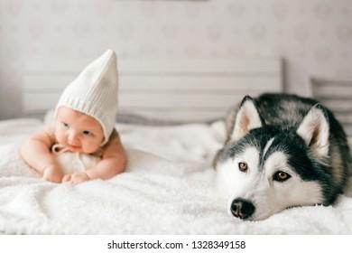 Imagenes Fotos De Stock Y Vectores Sobre Children Husky