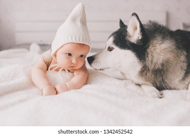 Newborn baby lifestyle soft focus portrait lying on back together with husky puppy on bed at home. Little child and lovely husky dog friendship. Adorable infant funny child in cap resting with pet
