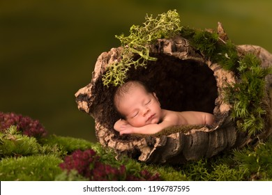 Newborn baby sleeping in a cork tree trunk
