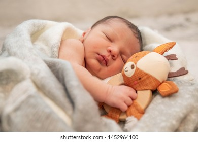Newborn Baby wrapped in blanket with his arm wrapped around a stuffed toy.