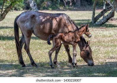 Newborn colt and his mother