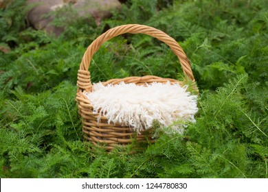 Newborn digital background basket with white fur on a background of green leaves