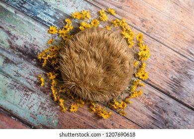 Newborn digital background with fresh picked yellow flowers