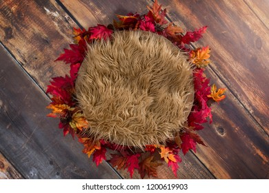 Newborn digital background with tan fur in red, orange, and yellow leaves on a wood background