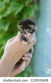 newborn fluffy kitten in the womans hands