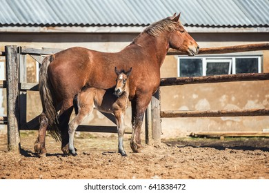 Newborn foal with his mother