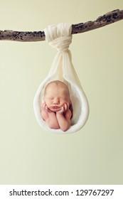 Newborn hanging by a branch