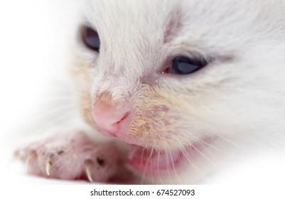 Newborn kitten on white background