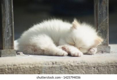 A newborn kitten taking a nap in the sunlight.