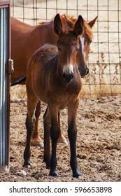 Newborn mule