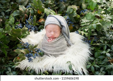 Newborn photo shoot in nature. a newborn baby is wrapped in a cocoon in a basket. newborn baby in green bushes with blue berries photo. photo in green tones. newborn baby pose cocoon