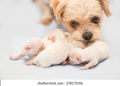 Mother Dog and Puppies Images, Stock Photos & Vectors