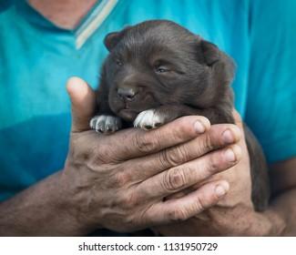 Newborn puppy in the hands of a veterinarian.