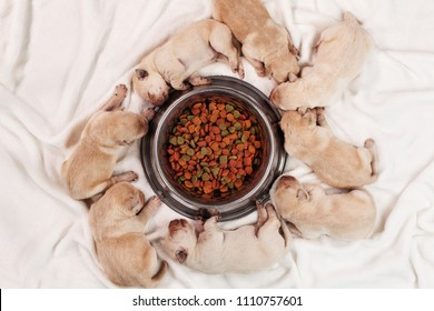 Newborn young yellow labrador puppy dogs sleeping around feeding bowl of their mother - top down view