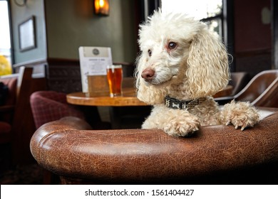 Newcastle upon tyne - Tyne & Wear - England - 10/18/19 - Dog in a pub