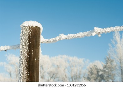 Newell County, Alberta, Canada.  Barbed wire fence and wooden post covered in hoar frost against a background of trees and clear blue sky on the Prairies on a sunny winter morning.