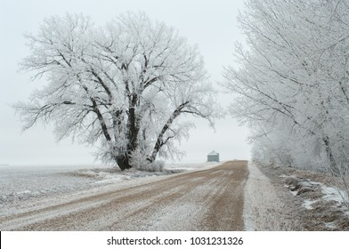 Newell County, Alberta, Canada.  Gravel country road and large trees covered in hoar frost in winter.
