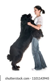 newfoundland dog and woman in front of white background